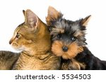Stock photo the puppy and kitten 5534503