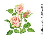 group of roses  pink flowers... | Shutterstock . vector #553459834