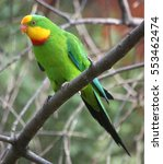 Superb Parrot Sitting On A...