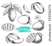 vector mango hand drawn sketch .... | Shutterstock .eps vector #553536274