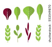 salad ingredients. leafy... | Shutterstock . vector #553549870