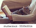 soft cuddly tabby cat lying in... | Shutterstock . vector #553563316
