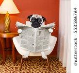 pug dog reading newspaper on a... | Shutterstock . vector #553586764
