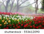 Colorful Tulip Garden In Sprin...