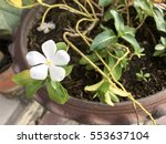 White Flower In Flowerpot