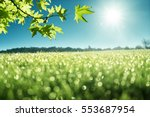 morning dew on green grass | Shutterstock . vector #553687954