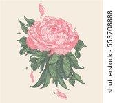 vintage vector floral peony... | Shutterstock .eps vector #553708888