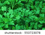 background from parsley. fresh... | Shutterstock . vector #553723078