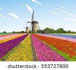 scenic field of tulips in the...   Shutterstock .eps vector #553727800