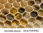 honeycomb   Shutterstock . vector #553759990