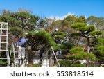 japanese professional gardener... | Shutterstock . vector #553818514