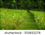 Trail Of Mown Turf In Prairie...