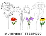 Vector  Isolated  Flowers  Boo...