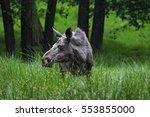 moose | Shutterstock . vector #553855000