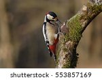Great Spotted Woodpecker   Male