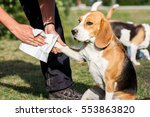 The Dog Breed Beagle Have Dirt...