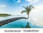 the palm tree bent horizontally ... | Shutterstock . vector #553869034