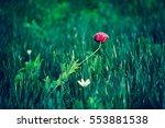Red Flower In The Green Garden