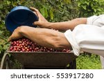 mexican coffee | Shutterstock . vector #553917280