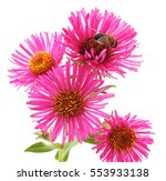 Bee On Pink Flowers Isolated O...