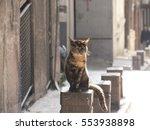 Sunbathing Cat   Cats Of...