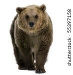 Female Brown Bear  8 Years Old...