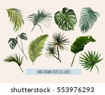 Stock vector beautiful hand drawn botanical vector illustration with tropical leaves isolated on white 553976293
