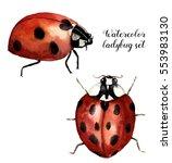 Watercolor Ladybug Set....