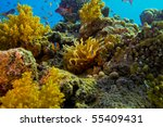 Yellow Clownfish and his anemone. Red sea. - stock photo