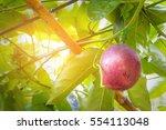 sunset in autumn harvest. green ... | Shutterstock . vector #554113048