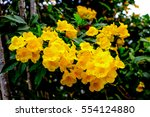 beautiful yellow flower with... | Shutterstock . vector #554124880