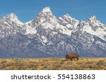 Lone bison grazing with grand...