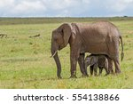 African Elephant And Calf At...