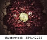 flower background and texture  | Shutterstock . vector #554142238