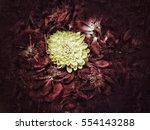 grunge flower background and... | Shutterstock . vector #554143288