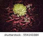 grunge flower background and... | Shutterstock . vector #554143384