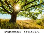 Beautiful Oak Tree In The Gras...