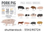 Pig And Hog  Breed Infographic...