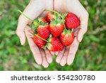 strawberries on female hand.   Shutterstock . vector #554230780