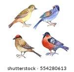 bird  bullfinch  sparrow ... | Shutterstock . vector #554280613