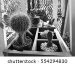 cactus in the garden on black... | Shutterstock . vector #554294830