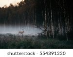 Beautiful Red Deer Stag Goes T...