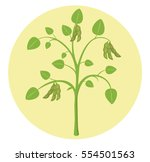 soybean plant soy flat design... | Shutterstock .eps vector #554501563