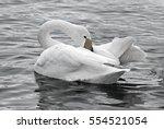 White Swan On A Winter Lake