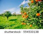 orange   orange tree orange park | Shutterstock . vector #554533138