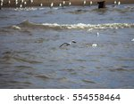colony of seagulls at a coast... | Shutterstock . vector #554558464