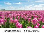 Field With Pink Tulips In The...