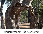 gate | Shutterstock . vector #554623990