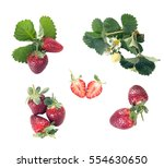 groups of berries whole and... | Shutterstock . vector #554630650
