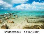 Caribbean Conch Farm